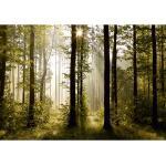 Fototapeta XXL Poranny las 360 x 270 cm, 4 części